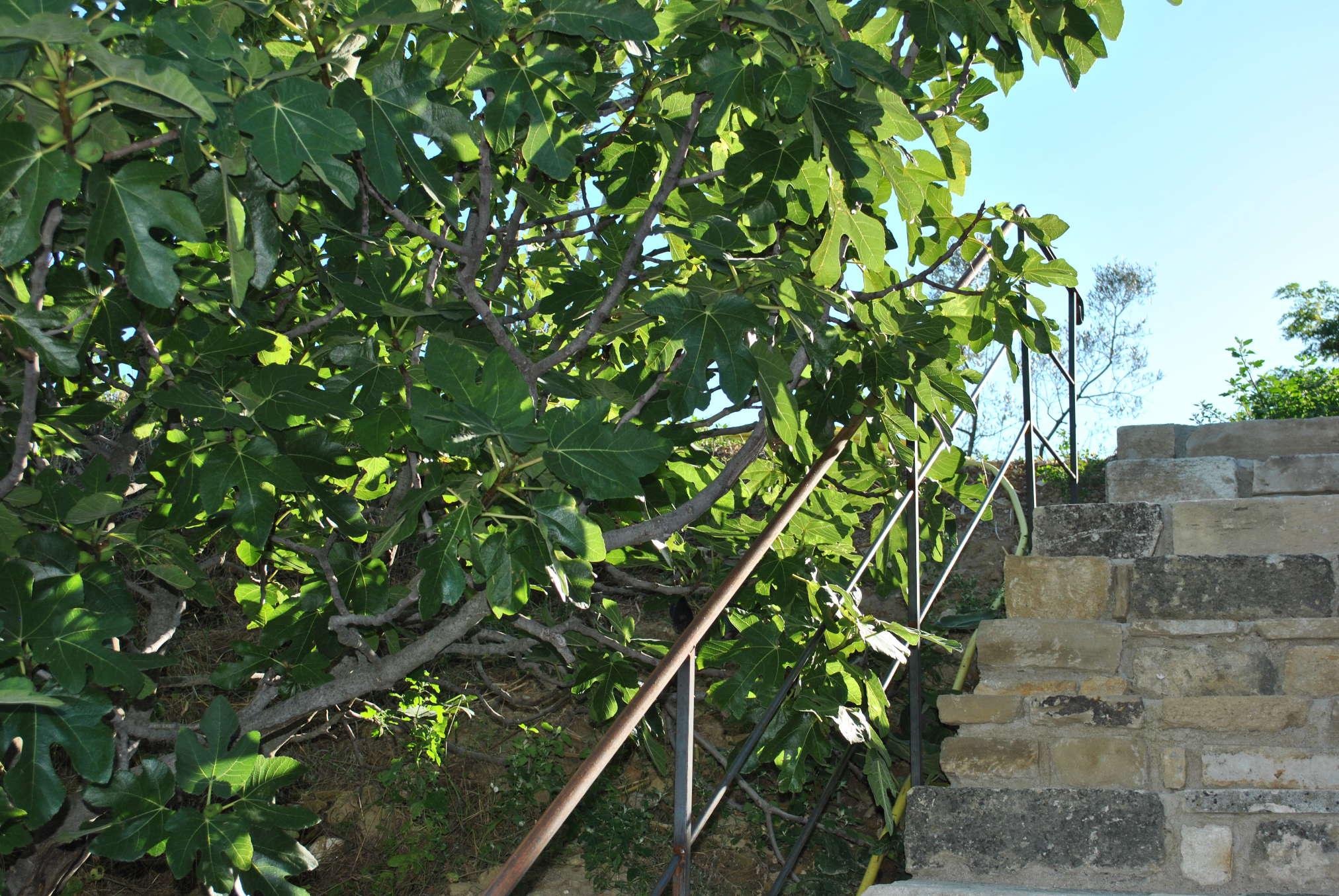 escalier-gite